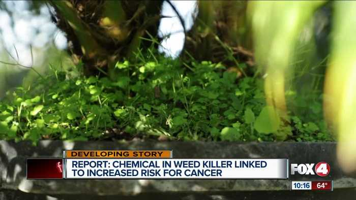 Study shows exposure to a chemical in weed killer could increase risk of cancer