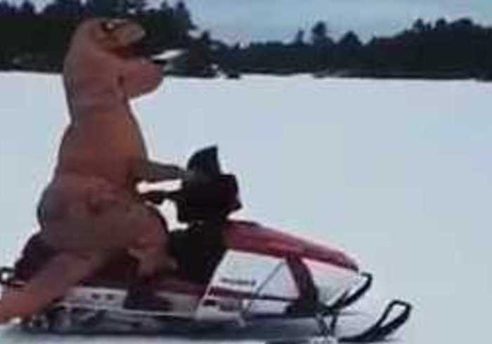 T-Rex Monsters It in Canadian Snow