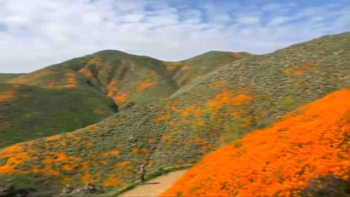 'Super Bloom' draws visitors to California hills