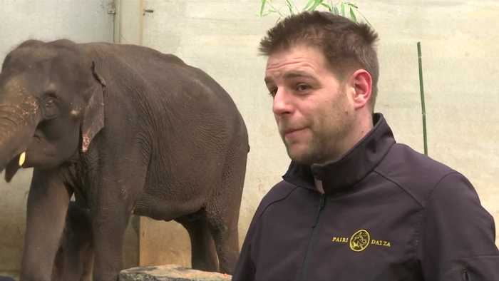 New elephant in the room at Belgian zoo