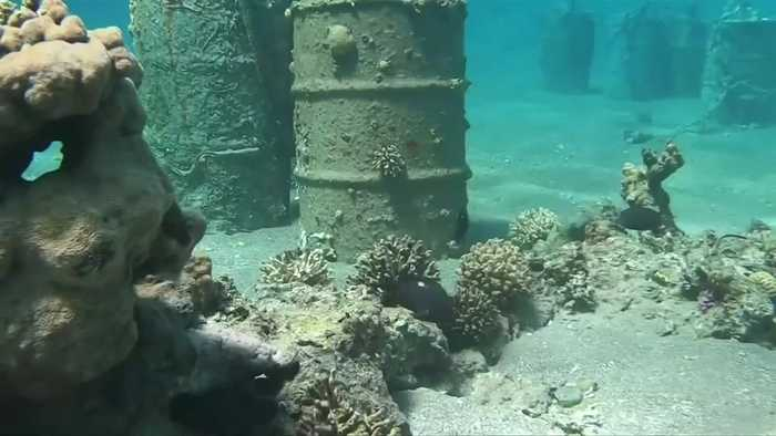 Israel moves corals after secret beach reopens
