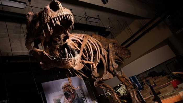 Meet Scotty, The Biggest T. Rex Ever Discovered