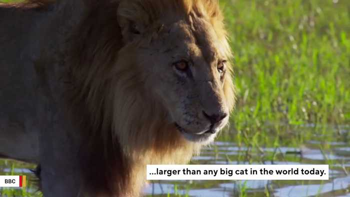 Scientists Announce Discovery Of Ancient Giant 'Lion' In Kenya