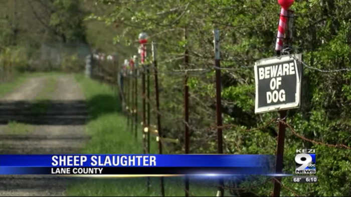 DOGS PUT DOWN AFTER SECOND MASS SHEEP SLAUGHTER IN EUGENE