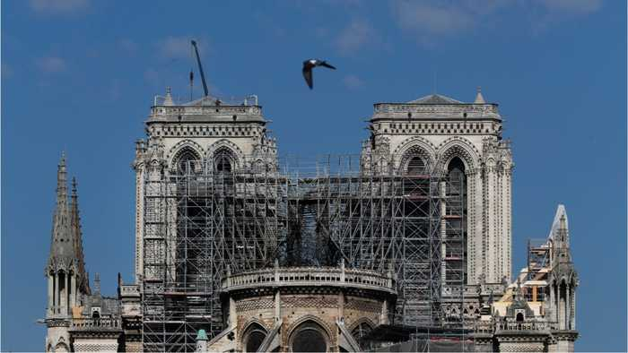 The Bees Living On Notre Dame's Roof Survived The Fire
