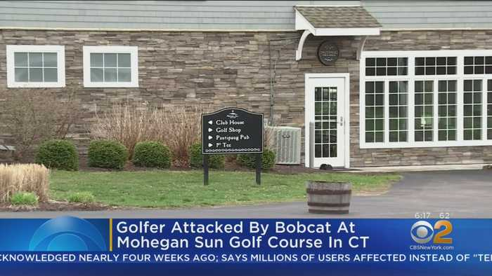 CT Golfer Attacked By Rabid Bobcat