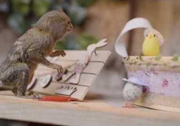 World's Smallest Baby Monkeys Enjoy Adorable Easter Celebration