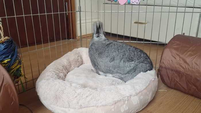 Bunny isn't happy when his cozy bed gets messy