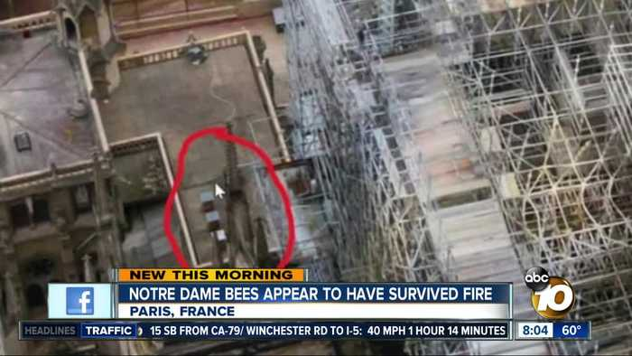 Notre Dame bess appear to have survived fire