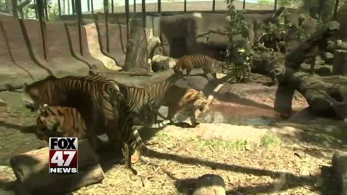Zookeeper suffers 'lacerations and punctures' in tiger attack