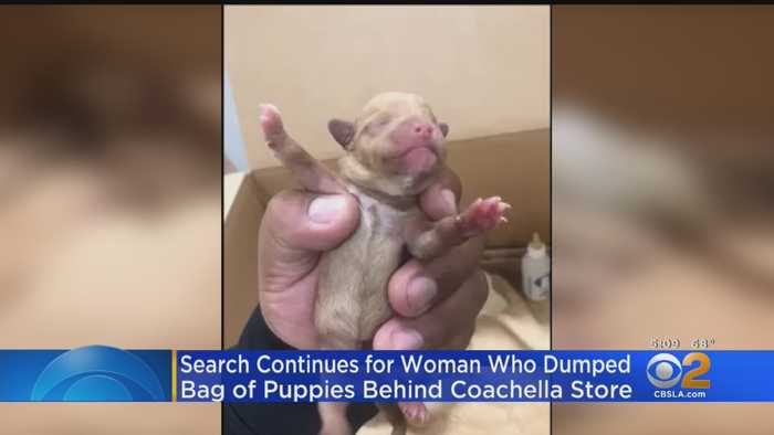 Search Intensifies For Woman Who Threw Bag Of Puppies Into Trash