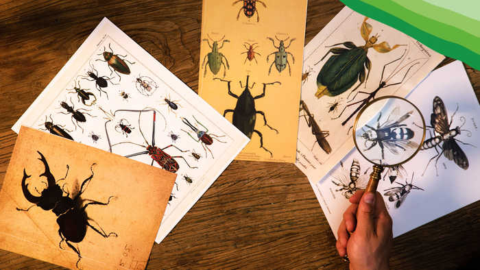 In Search of Undiscovered Insects