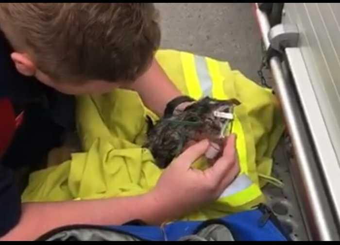 Firefighters Resuscitate Kitten Saved From Drain Pipe in New South Wales