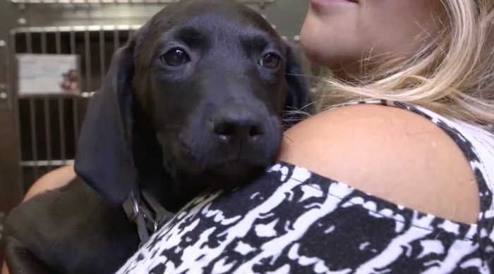 Kenton County Animal Shelter waives adoption - One News Page VIDEO