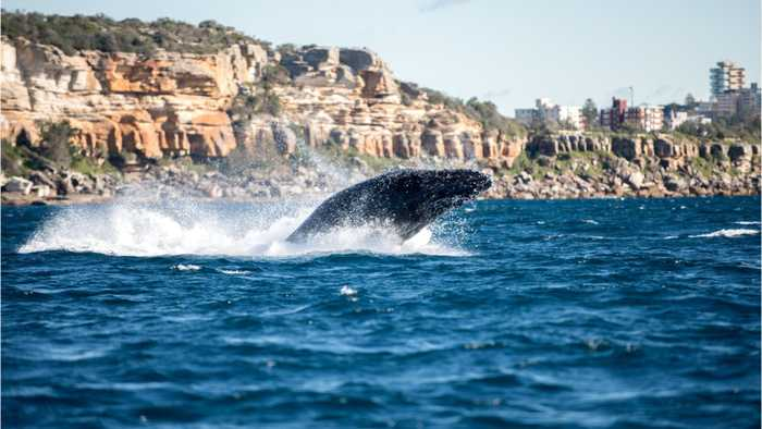 Warm Waters Potentially Causing Mass Whale Deaths