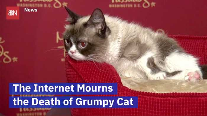 Grumpy Cat Is No Longer With Us