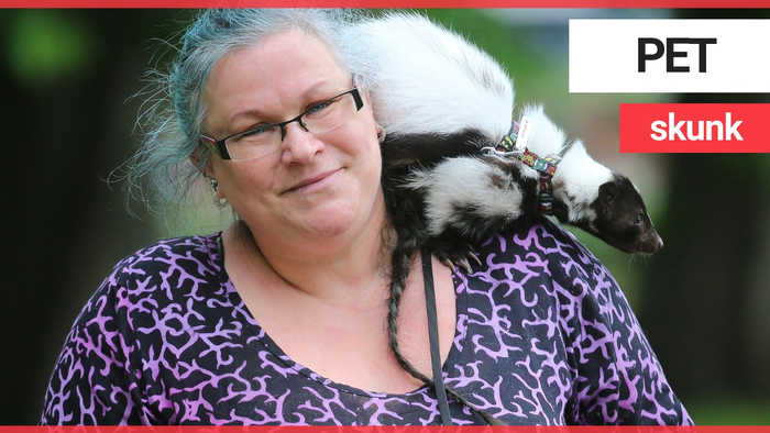 Nurse battling anxiety and depression tells how her symptoms have eased thanks to pet SKUNK