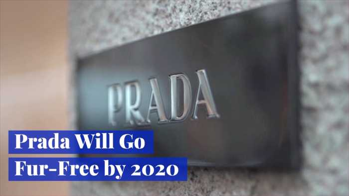 Prada Is Moving Towards More Cruelty Free Products