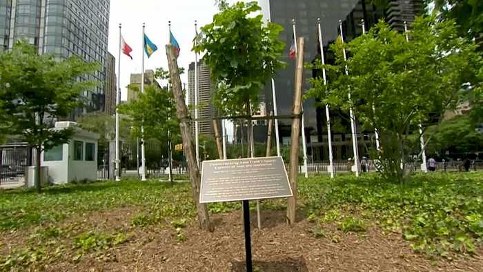 Watch: Anne Frank tree planted at UN headquarters