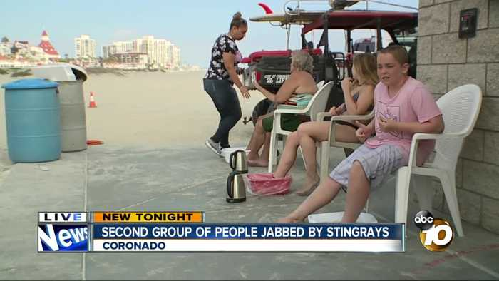 12 more people stung by stingrays in Coronado