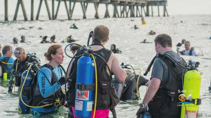 Divers In Deerfied Beach Clean Up Set New World Record