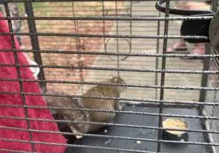 Alabama Police Discover Caged 'Attack Squirrel' During Limestone County Arrest