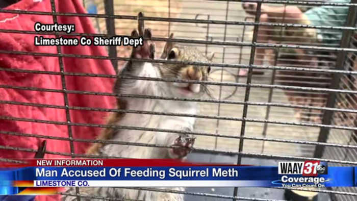 Meth Fed Squirrel in Limestone county