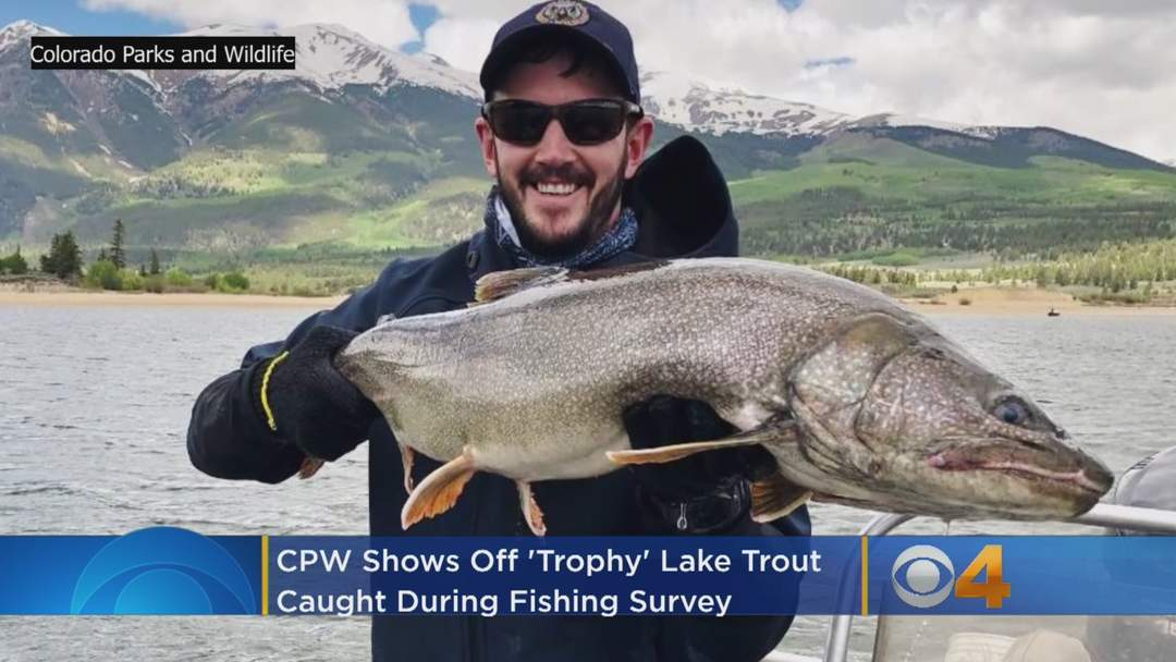 'Bring A Heavy Line': CPW Shows Off 'Trophy' Lake Trout Caught During Fishing Survey