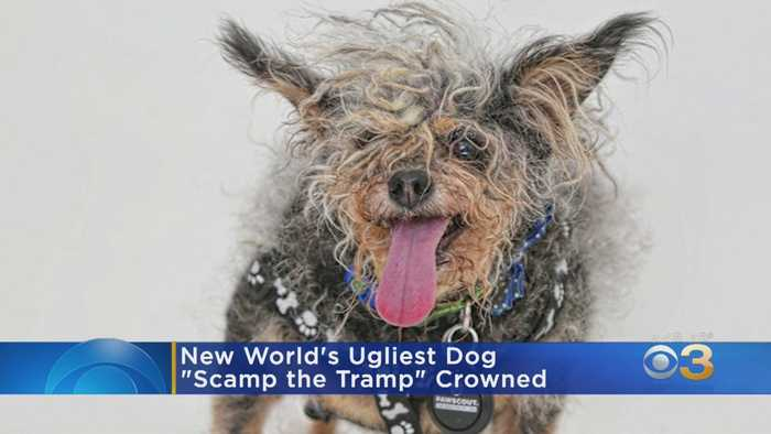 There's A New World's Ugliest Dog