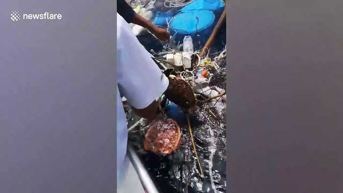 Fishermen rescue two sea turtles trapped in floating rubbish off Thailand