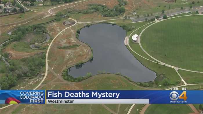 Hundreds Of Dead Fish Wash Up In Westminster City Park Lake