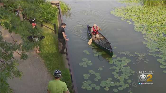 New Strategy, Expert In Place For Humboldt Park Alligator Search Day 7