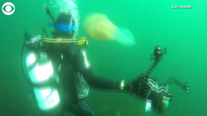 WEB EXTRA: Giant Jellyfish Spotted