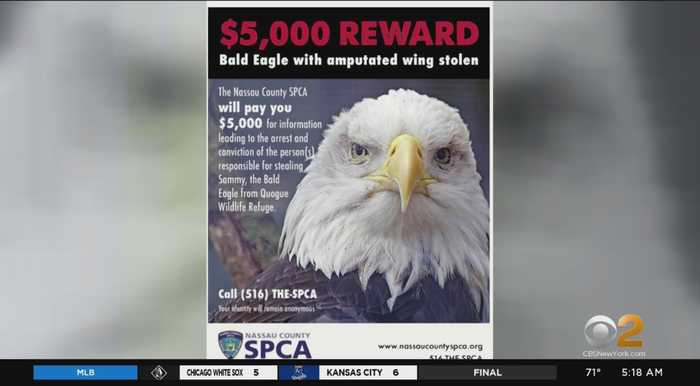 Reward In Search For Stolen Bald Eagle
