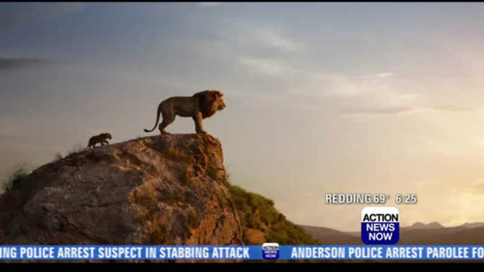 THE LION KING Movie Clip - Pumbaa, Timon & Simba - One News Page VIDEO