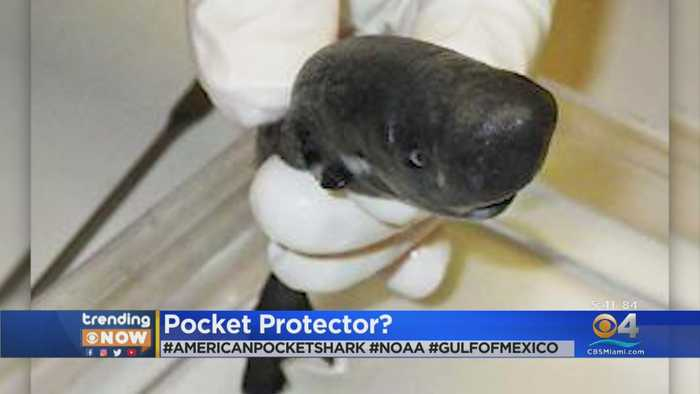 TRENDING: Shark Found In Gulf Of Mexico Glows In The Dark