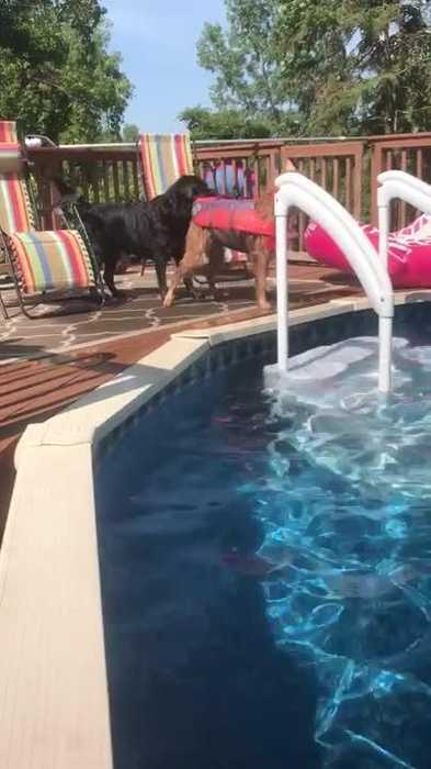 Dog Trying to Save Other Dog from Swimming by Himself