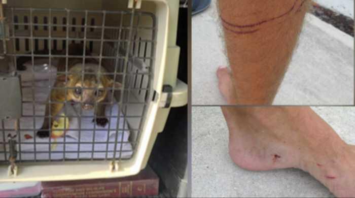 Lake Worth Beach resident bitten by kinkajou, officers capture animal in bathroom