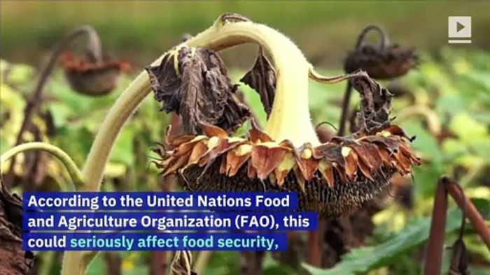 Half a Billion Bees Dead in Brazil Due to Pesticide Use