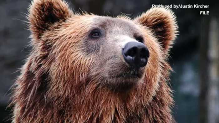 Composer Killed by Bear While Gathering Nature Sounds in Canadian Wilderness