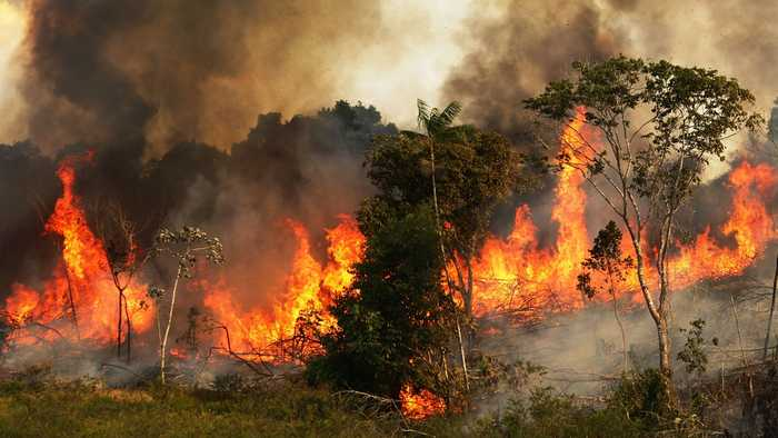 Rainforest Fires Fill Brazil's Skies With Smoke, Fanning Climate Fears