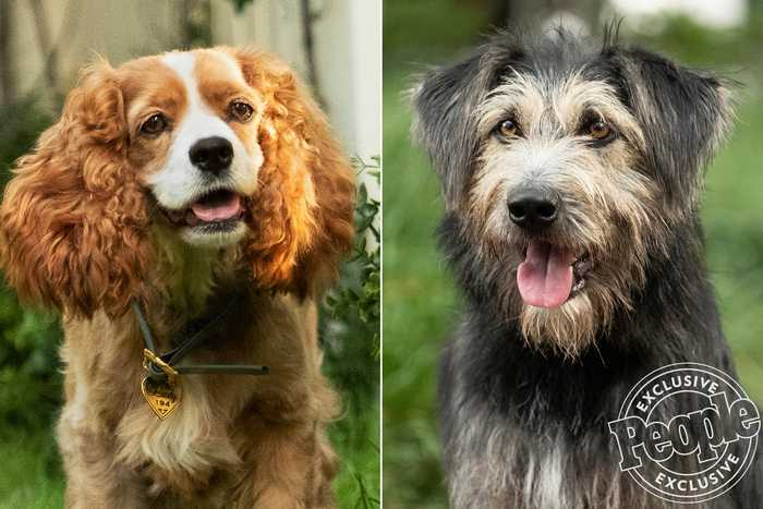 Shelter Dog Lands Lead Role in 'Lady and the Tramp' Remake