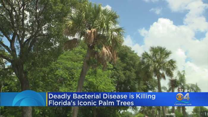 Insect Killing Palm Trees