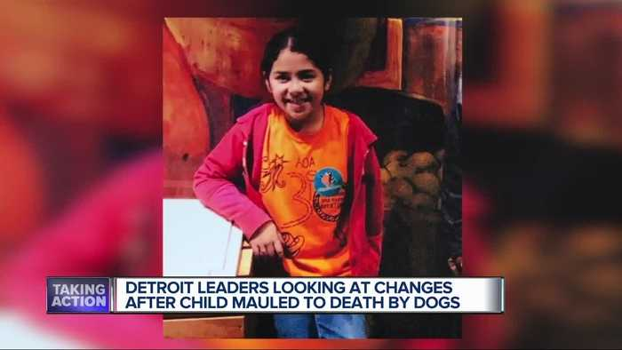 Detroit leaders looking at changes after child mauled to death by dogs