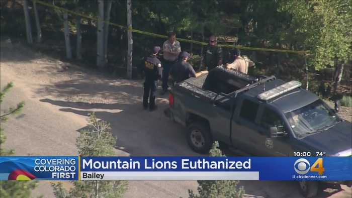 Wildlife Officers Kill 2 Mountain Lions After Boy Attacked