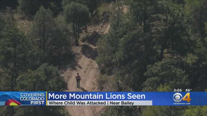 Bailey Boy Bitten On Head By Mountain Lion Remains In Hospital