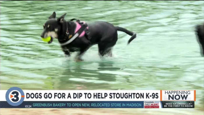 Fifth annual dog swim fundraiser for Stoughton Police Department's K-9 unit