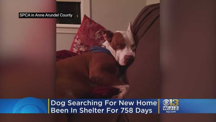 Shelter Dog Looking For Furever Home After Spending More Than 2 Years In SPCA