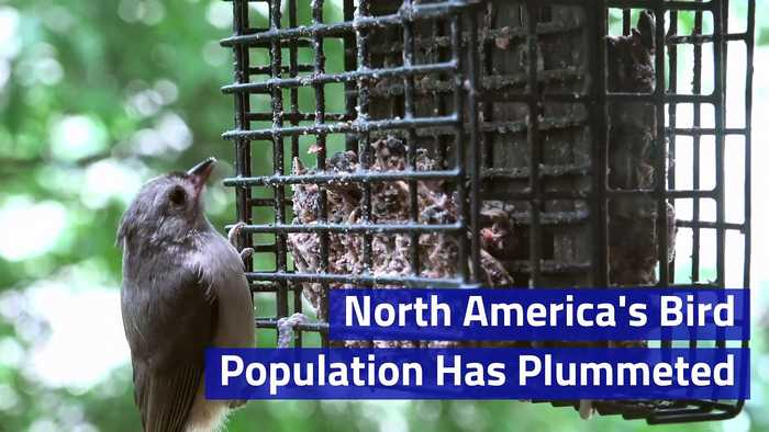 North America's Bird Population Has Plummeted