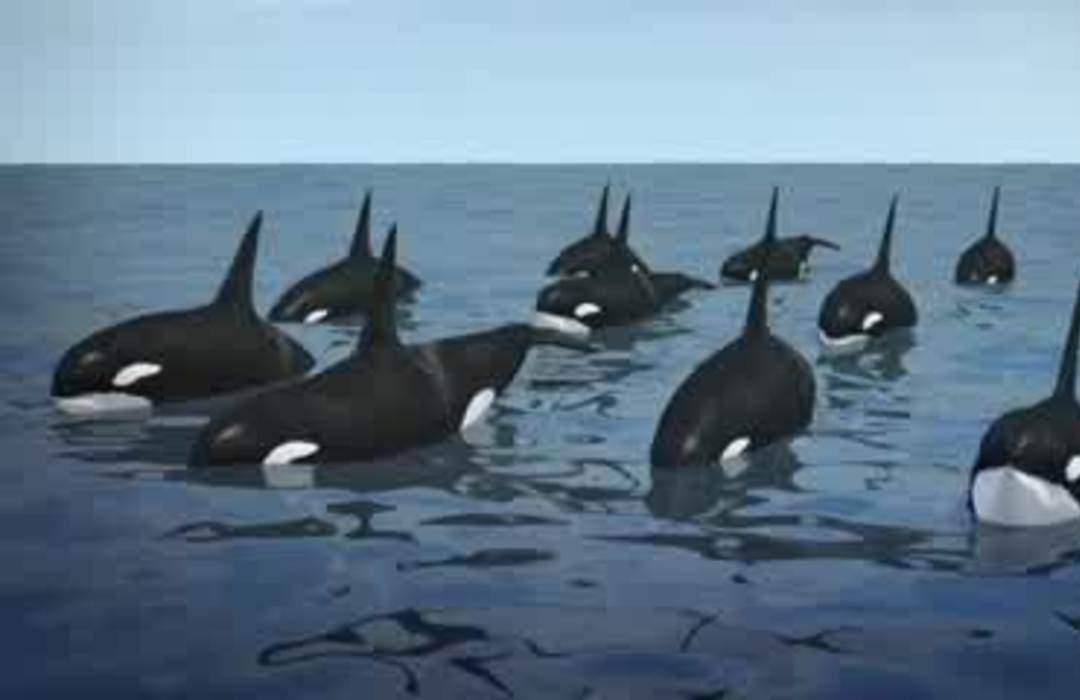 NOAA proposes plan to expand killer whale habitat